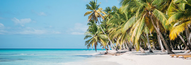 Punta Cana Ausflüge Palmen