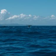 Ausflüge Punta Cana Fluke