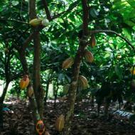 Ausflüge Punta Cana Kakao