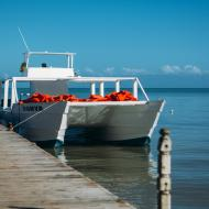 Ausflüge Punta Cana Walboot 1