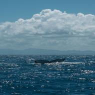 Punta Cana Ausflüge Fluke1