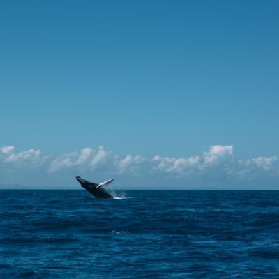 Punta Cana Ausflüge Walsprung